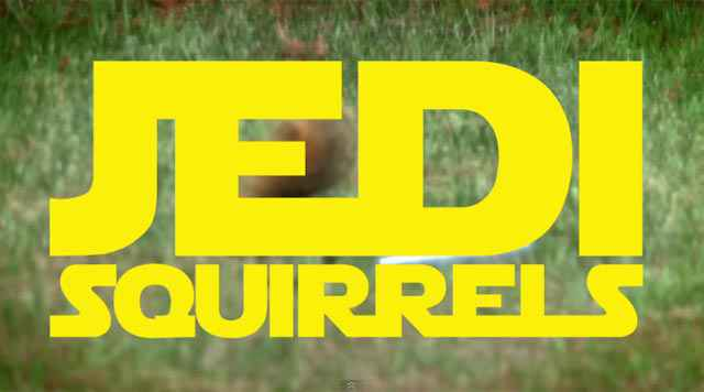 Un écureuil avec un sabre laser
