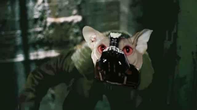 Batman: Dark Knight Rises - La bande annonce avec des chats