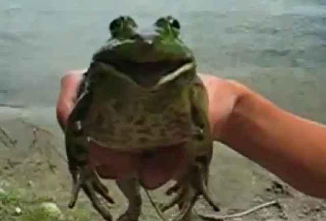 Star Wars - Une grenouille qui chante la marche impériale