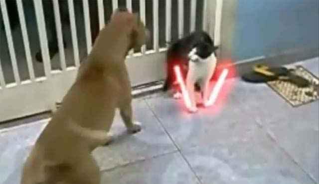 The Cat Unleashed - Le chat au sabre laser