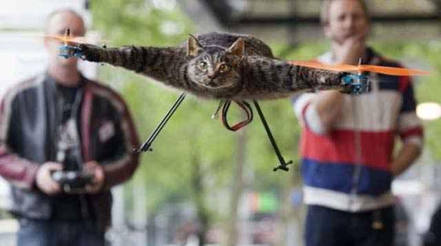 Orvillecopter – Le chat quadricoptère