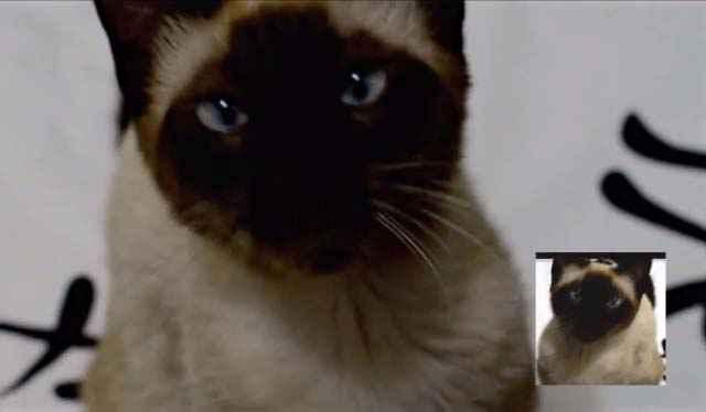 Le générique de Game of Thrones interprété par un chat