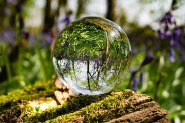 Enfermée dans une bouteille depuis 53 ans et arrosée seulement en 1972, une plante a créé son propre éco-système