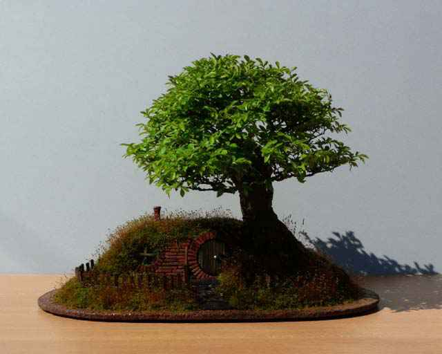 002-bonsai-landscape