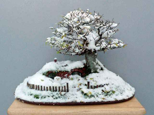 25-bag-end-bonsai