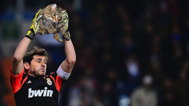 sportsballsreplacedwithcats10