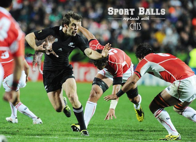 sportsballsreplacedwithcats11