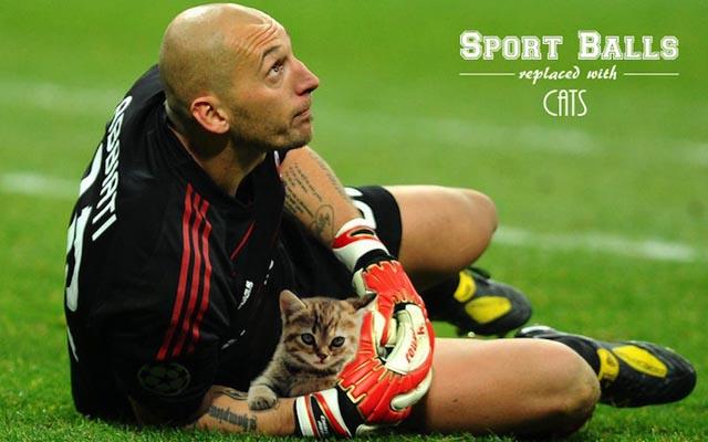 sportsballsreplacedwithcats14