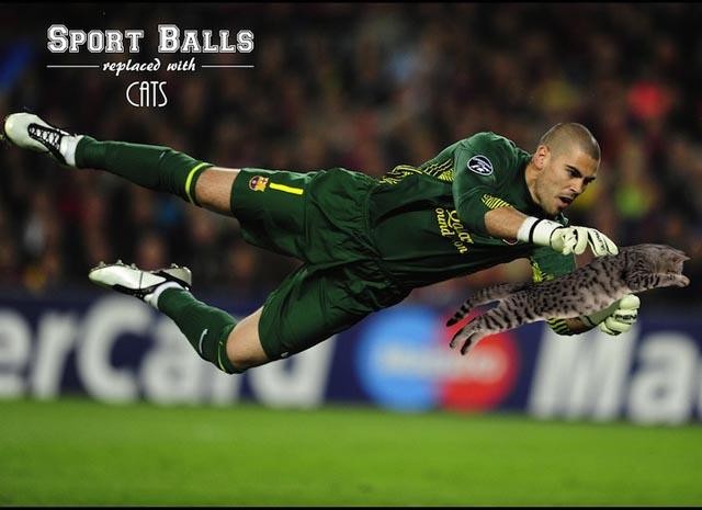 sportsballsreplacedwithcats4