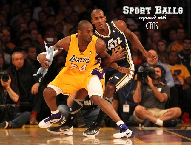 sportsballsreplacedwithcats7