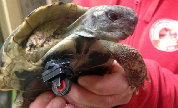 tortue-roue-lego