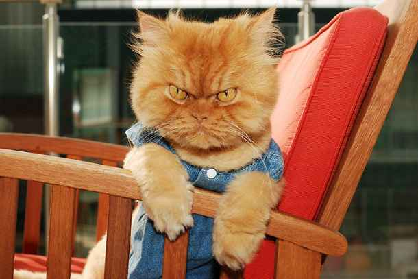 chat-garfi-evil-grumpy-cat-9