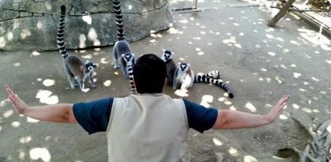 gardien-zoo-meme-jurassic-world-008