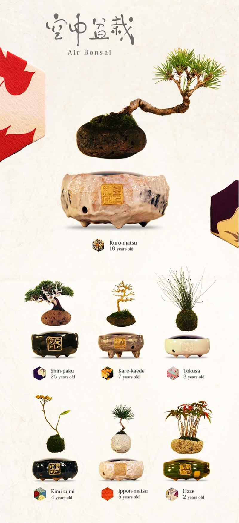 Air_bonsai_Japon_2016_Neozone001