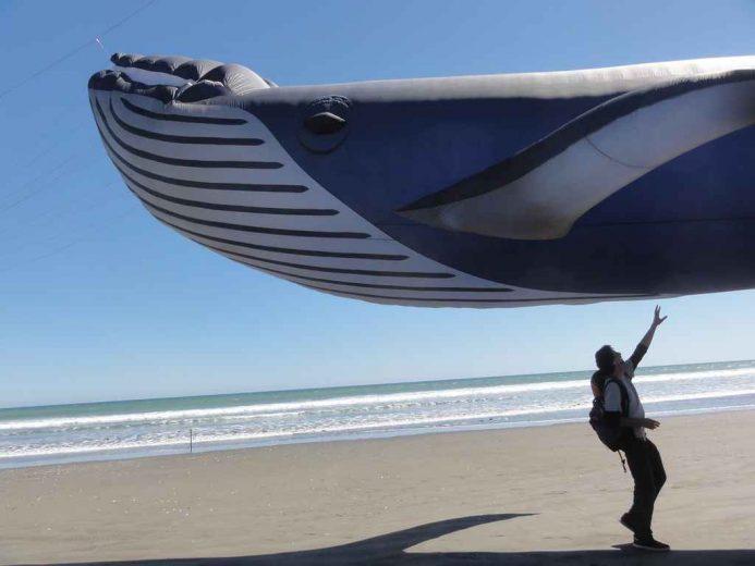 cerf-volant-baleine-002