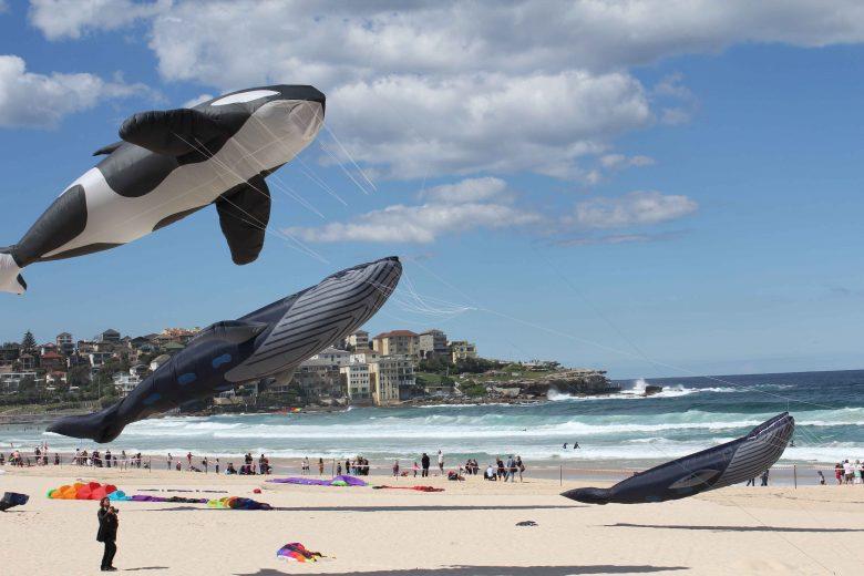 cerf-volant-baleine-003