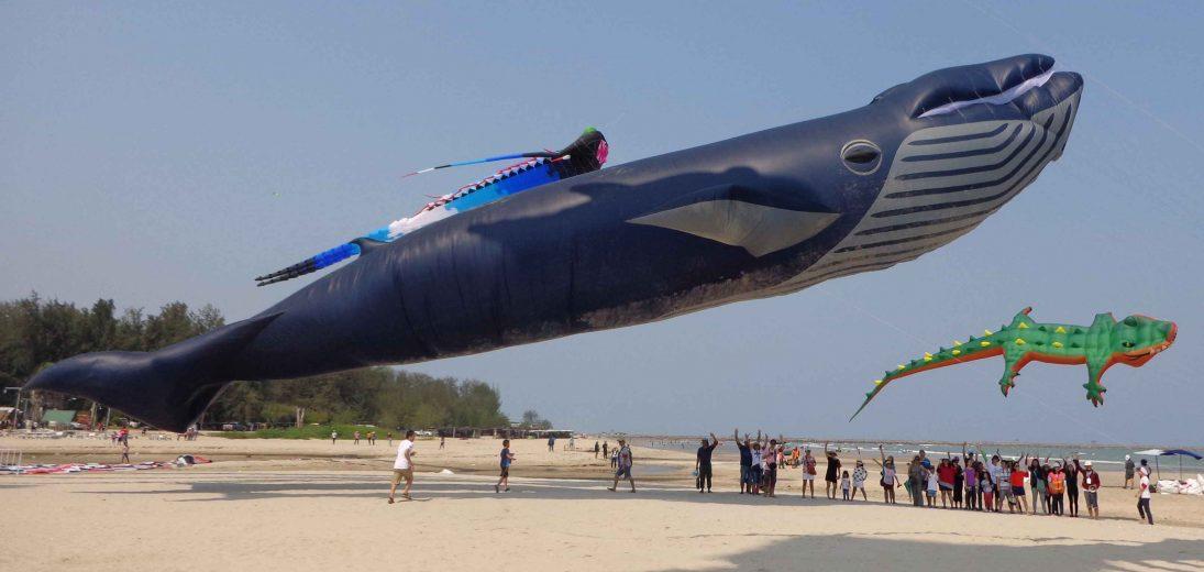cerf-volant-baleine-004