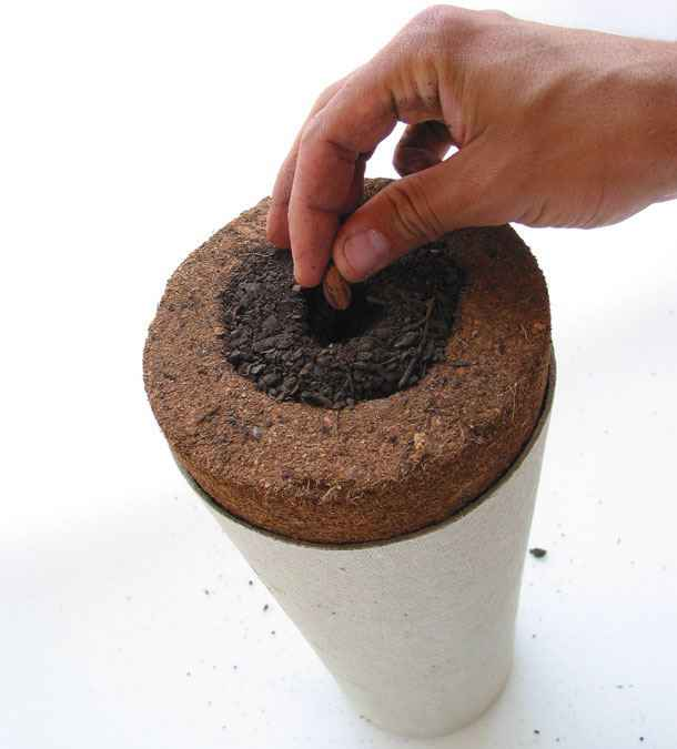 urna bios l 39 urne fun raire qui vous transforme en arbre neozone. Black Bedroom Furniture Sets. Home Design Ideas