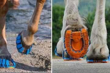 Oubliez le fer à cheval, voici un ingénieux système sans métal et sans clou