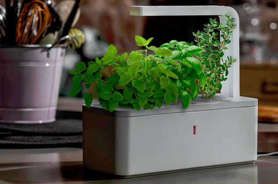 click grow smart herb garden le mini potager d 39 int rieur neozone. Black Bedroom Furniture Sets. Home Design Ideas
