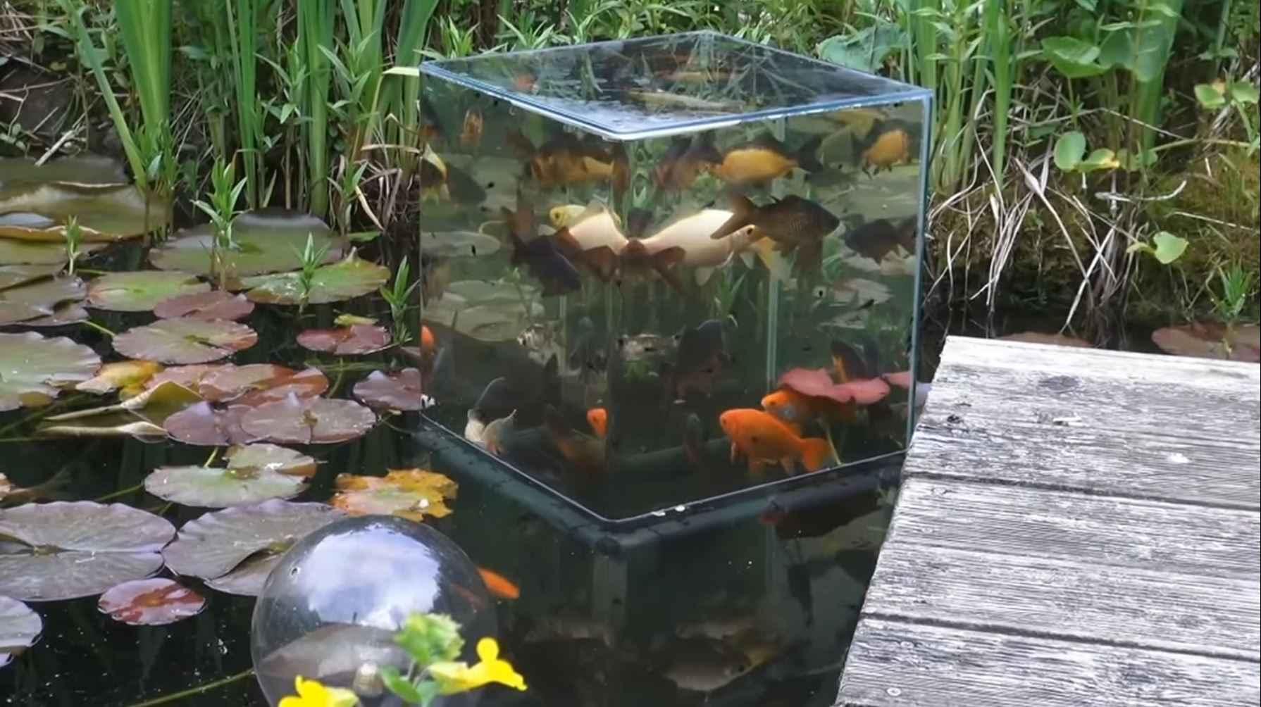 Poisson Rouge Bassin Extérieur comment faire une tour à poissons avec un aquarium inversé