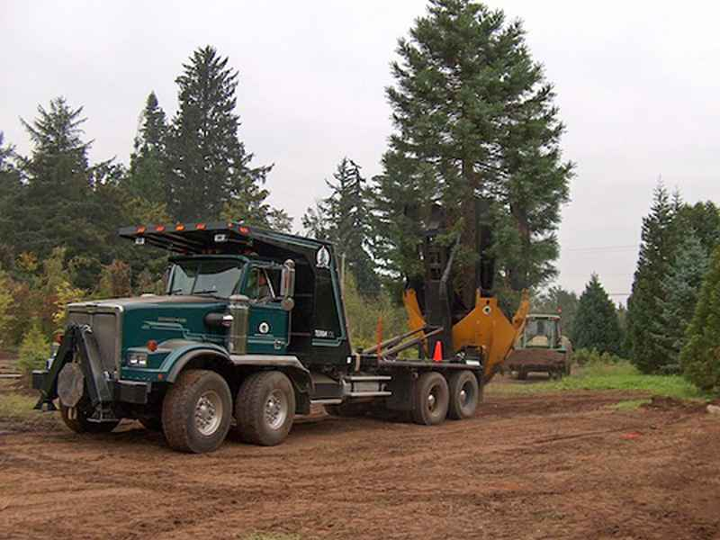 Dutchman industries la machine qui permet de d placer les arbres sans les couper neozone - Cout pour couper un arbre ...