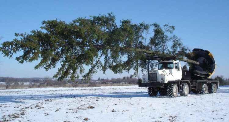 Bftj0hm3dhm - Cout pour couper un arbre ...