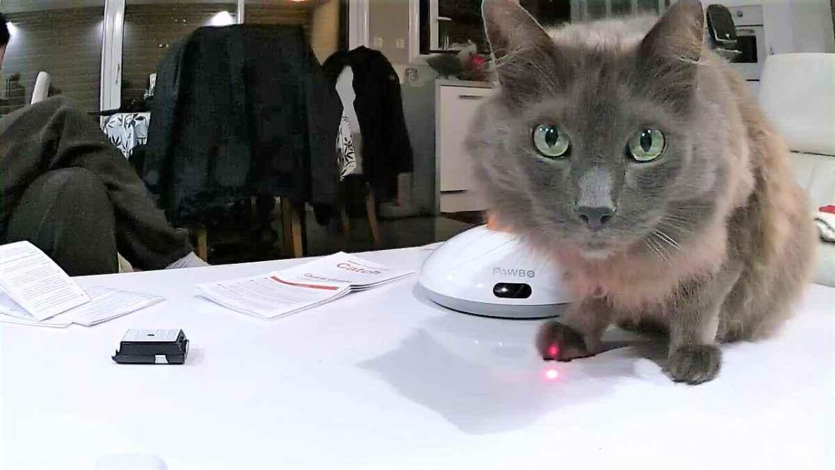 TEST PABOW+ : Jouez en 4G avec votre animal de compagnie !
