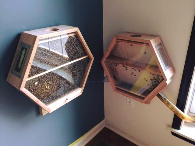 Une ruche dans votre salon