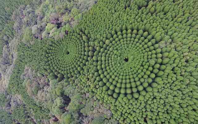 Japon : Des crop circles parfaits découverts dans une forêt