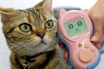 Des japonais ont inventé un traducteur pour comprendre les chats…