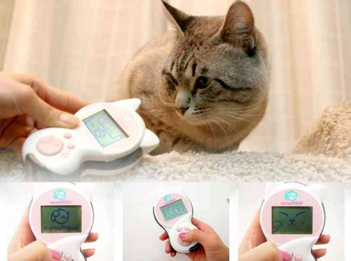 Des japonais ont inventé un traducteur pour comprendre les chats...