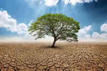 Trump tente d'étouffer une étude sur le climat, un éditeur le publie dans son intégralité