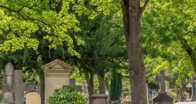 Quand les cimetières se transforment en refuge de la biodiversité
