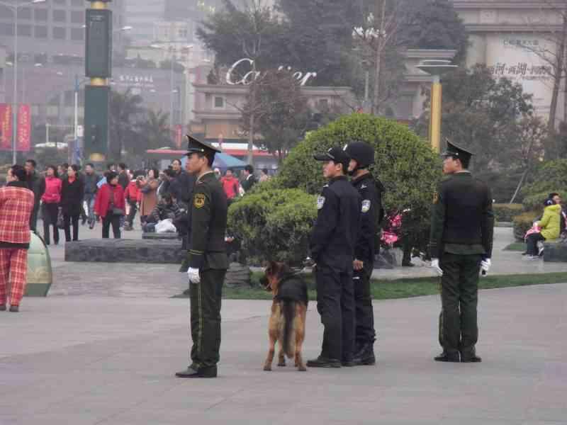 """La chine va cloner ses chiens policiers """"Sherlock Holmes"""" pour réduire la durée de dressage"""
