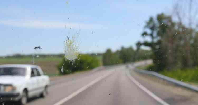 De moins en moins d'insectes s'écrasent sur nos pare‑brises, et c'est très inquiétant...