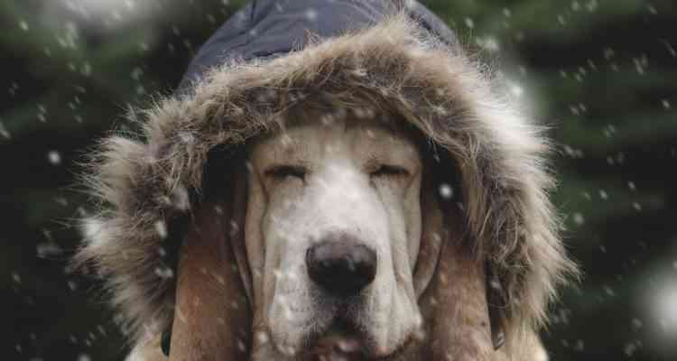 Ces étudiants ont inventé une niche chauffée à l'énergie solaire pour protéger les animaux errants l'hiver