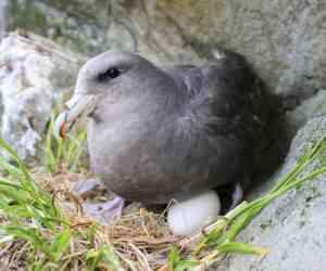 On retrouve du plastique jusque dans des œufs des oiseaux en Arctique...