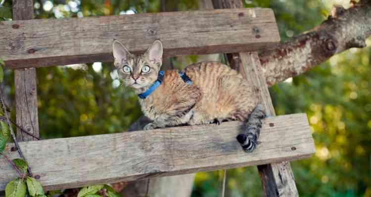 Suisse : Des échelles sur les façades pour aider les chat à circuler plus librement