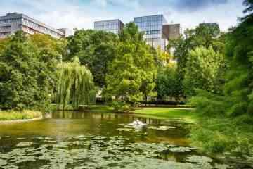 En Belgique, chaque naissance sera célébrée par la plantation d'un arbre