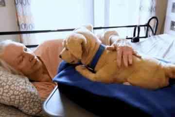 Tombot, le chien robot ultra-réaliste conçu pour accompagner les personnes âgées et les personnes malades