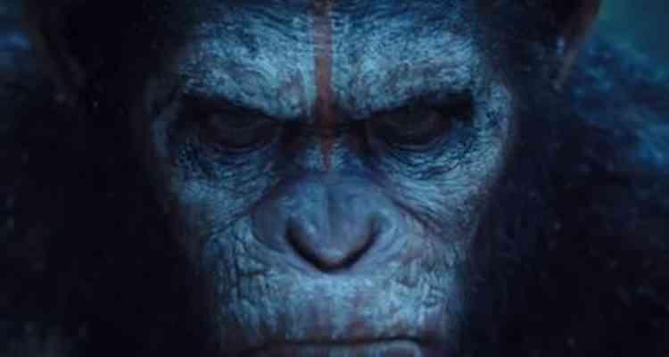 Des chercheurs chinois ont implanté un gène du cerveau humain à des singes