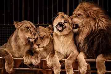 Bonne nouvelle ! Le Portugal interdit les animaux sauvages dans les cirques