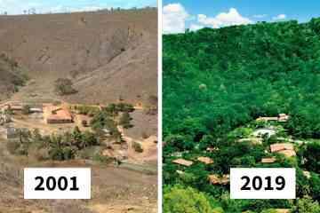 En 20 ans, ce couple a planté plus de 2 millions d'arbres pour restaurer la faune et la flore