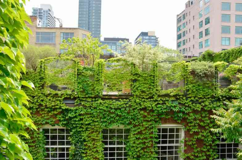 Focus sur les toits végétalisés, un concept écologique et innovant !
