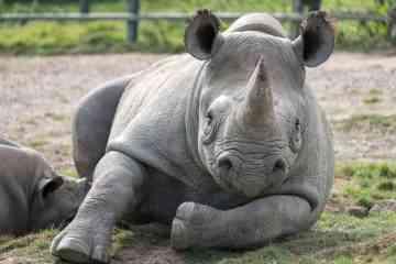 Le Kenya va appliquer la peine de mort pour le braconnage d'animaux protégés