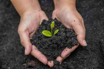 Le compost humain légalisé par l'Etat de Washington, pour un enterrement encore plus éco-responsable !