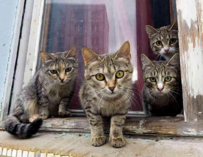 Job de rêve : On recherche une personne pour choyer 55 chats sur une île paradisiaque grecque !