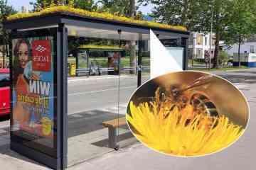 Les Pays Bas végétalisent 316 abris-bus pour fournir un refuge aux abeilles