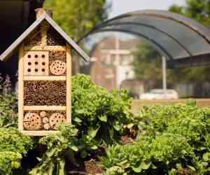 Comment adopter (et aider) les abeilles sauvages avec un nichoir à insectes